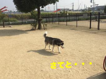 IMG_2473_Fotor.jpg