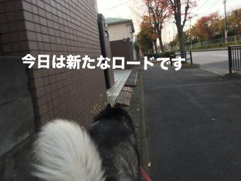 IMG_2567_Fotor.jpg