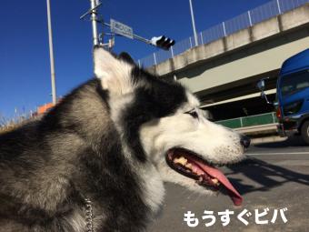 IMG_2595_Fotor.jpg