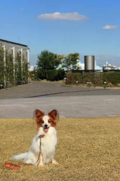 第2回犬@写真部 11/04/2015