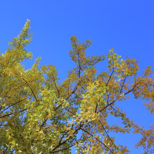 秋のご近所お散歩Photo