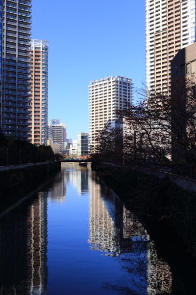 お散歩フォト 12/01/2105