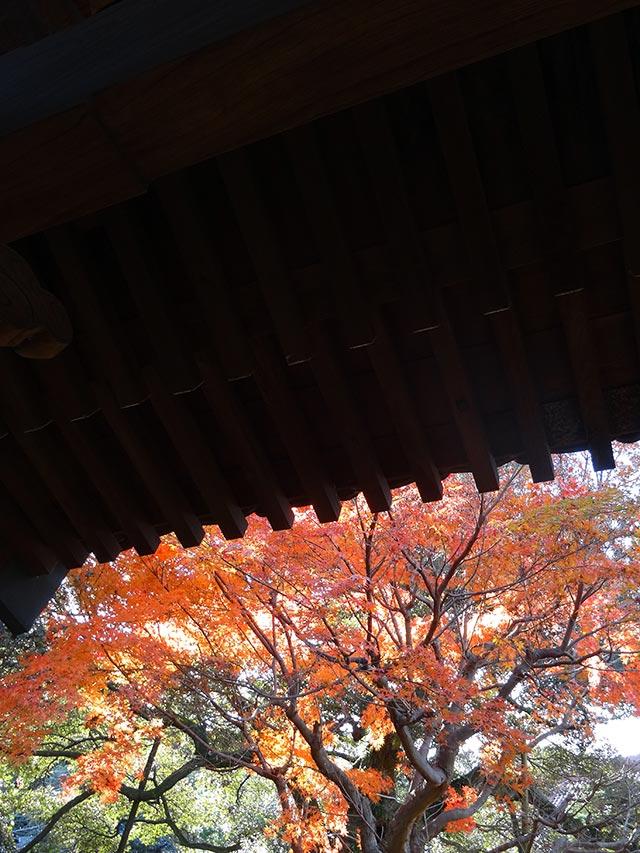 紅葉の高根寺1