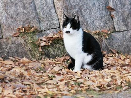 オーナー撮影猫2