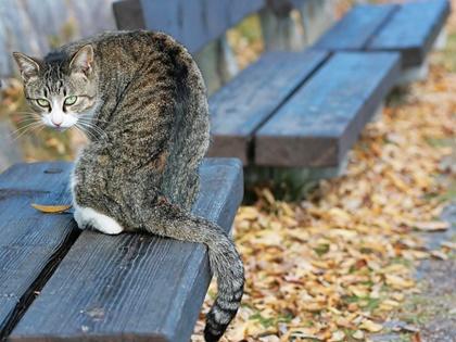 オーナー撮影猫3