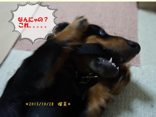 20151028-るな2