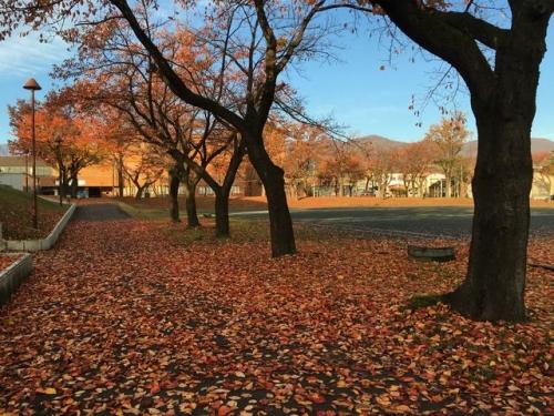 2015-11-12妙高市文化ホール紅葉2