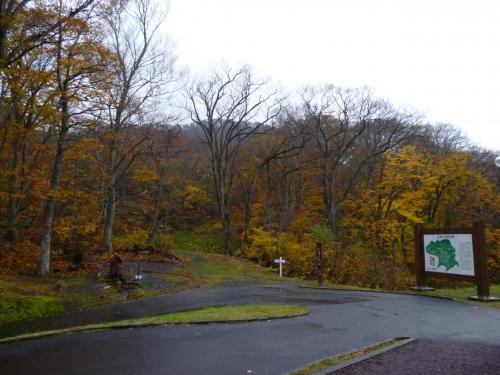 10月31日白神の森