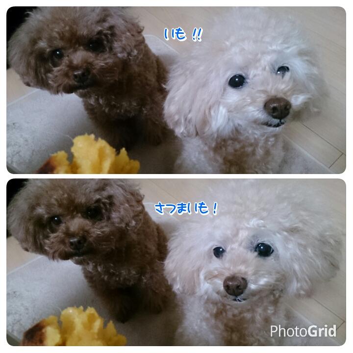 20151129214205abe.jpg