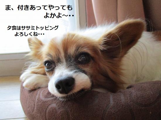 IMG_0820_convert_20151105152824.jpg