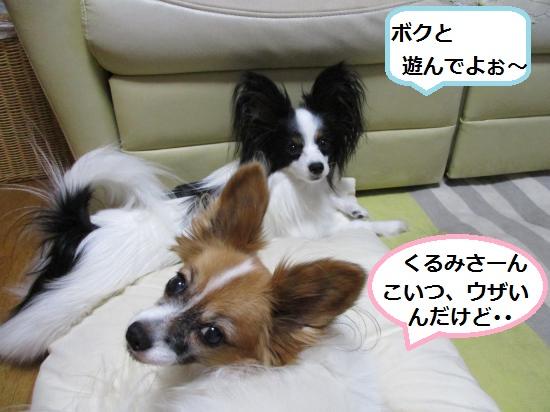 IMG_0946_convert_20151102142321.jpg