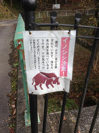 2015 11 25 文殊の森4