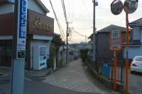shiba (3)
