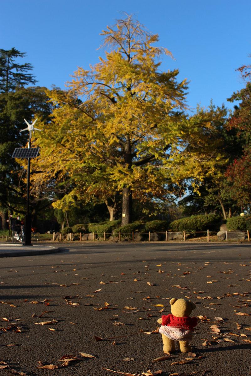 駿府城公園の銀杏を観る 151124
