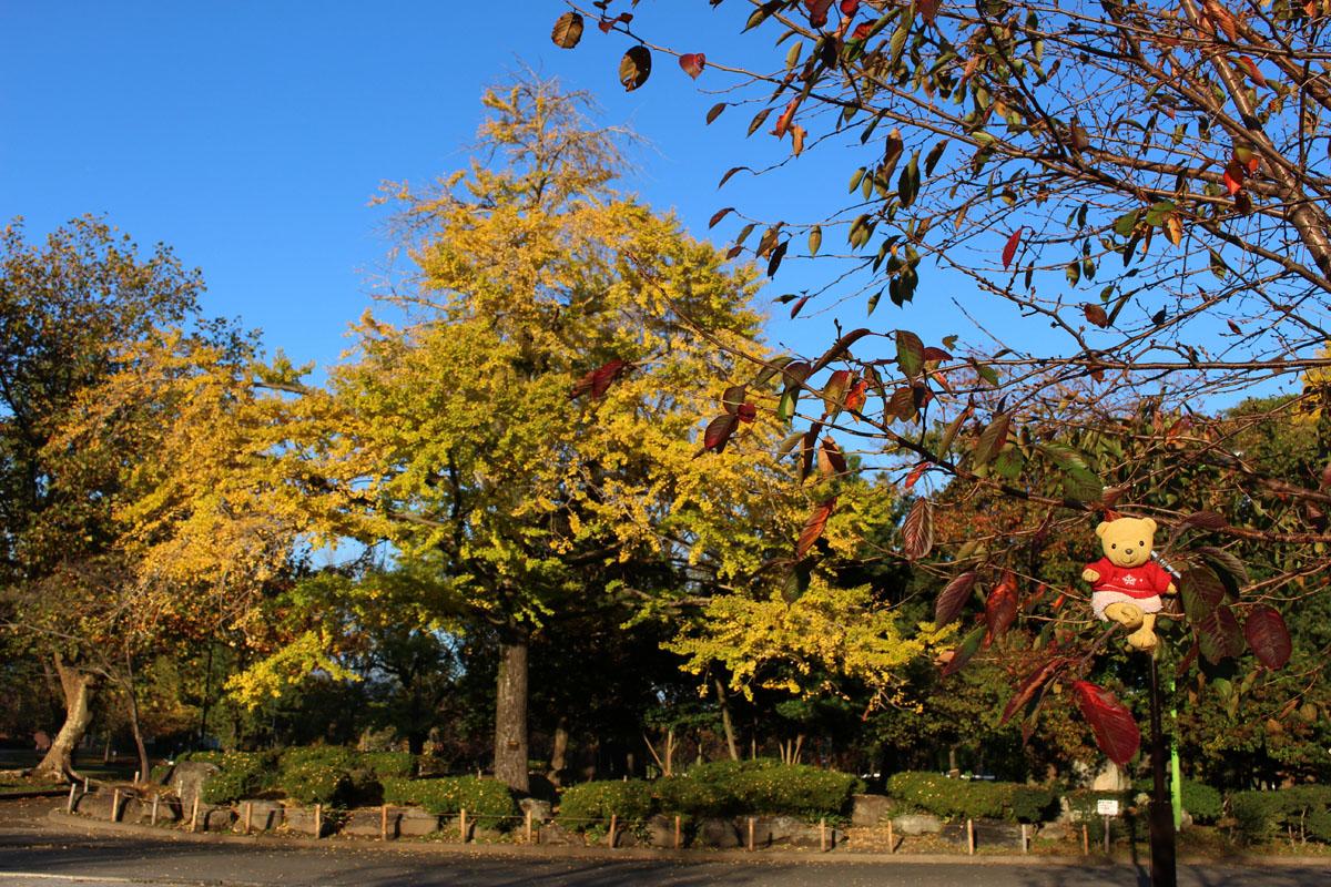 駿府城公園の銀杏と 桜の枝に乗って 151124