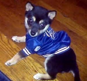 ガガの犬ヨーコ