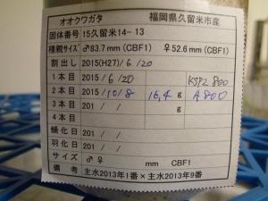 P1030858.jpg