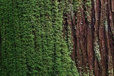 tree-scape.jpg