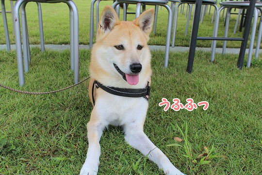 s-kosumosu151207-IMG_9349