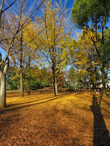 20151128_wakakusakouen_08.jpg