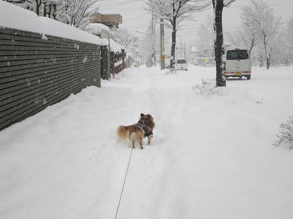 近所 どか雪