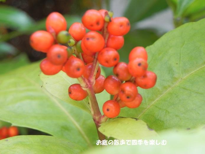 senryou10_20151111002323c96.jpg