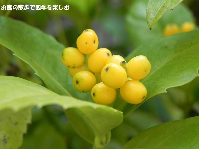senryou9_20151111002419745.jpg