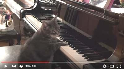 ねこピアノ
