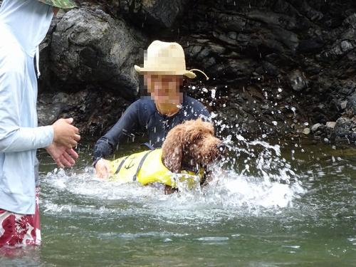 泳げない犬