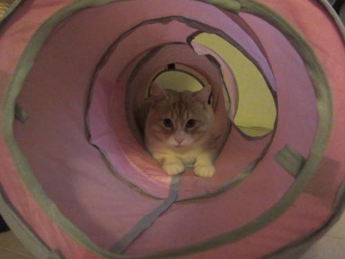 トンネル夢二
