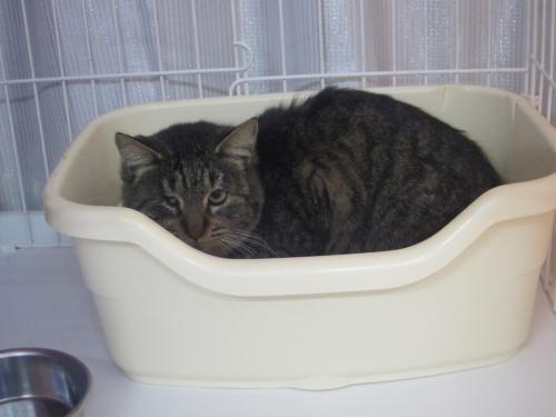 管理センターの猫3