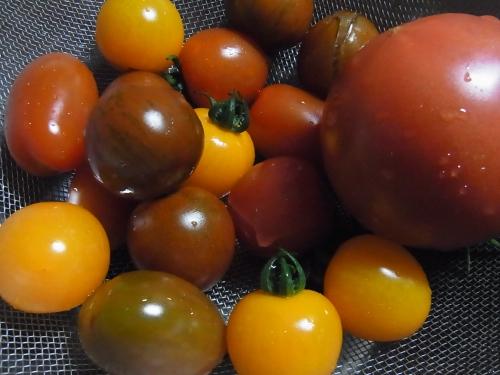 RIMG0324トマト