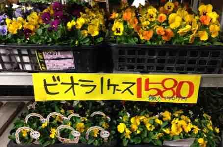 fc2blog_201510231827262bc.jpg