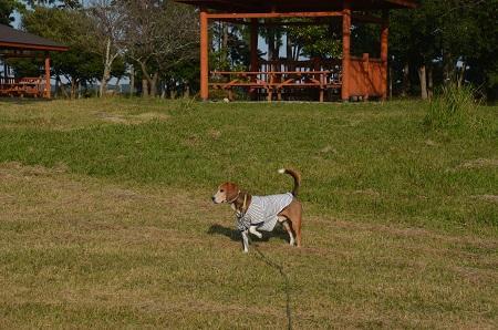 20151101和田公園07