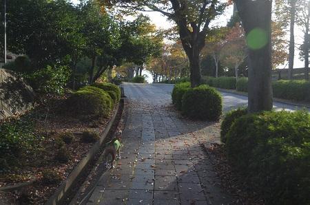 20151111岩名運動公園03