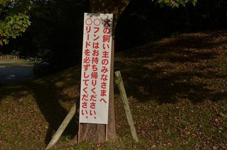 20151111岩名運動公園09