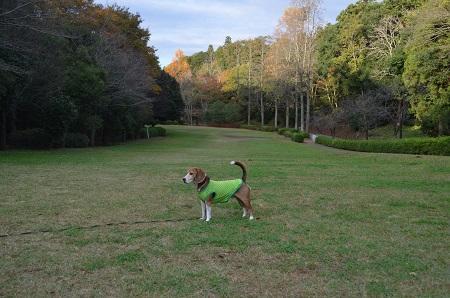 20151111岩名運動公園24