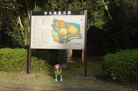 20151111岩名運動公園23