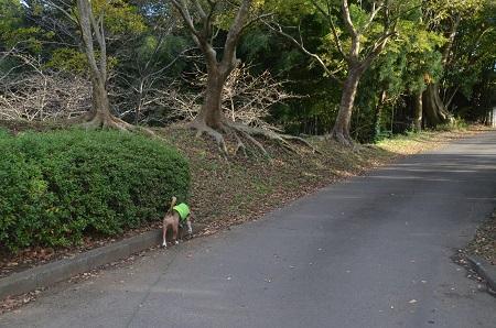 20151111岩名運動公園20