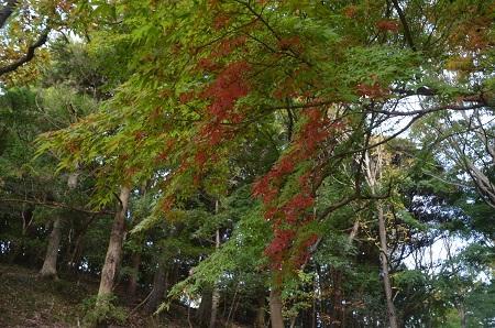 20151111岩名運動公園33