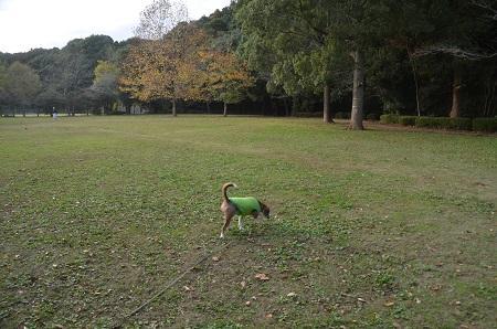 20151111岩名運動公園42