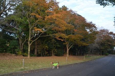 20151111岩名運動公園40