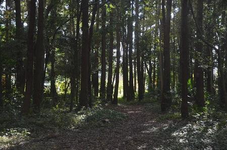 20151112中里市民の森06