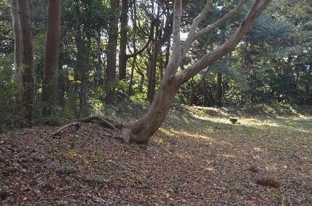 20151112中里市民の森25