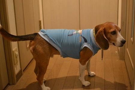 20151118犬服28作29