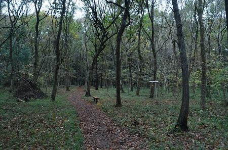 20151126早深の森04