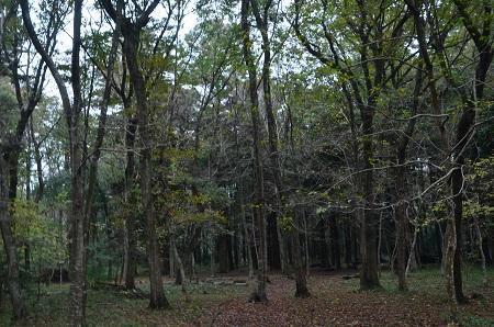 20151126早深の森07