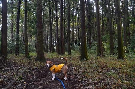 20151126早深の森17