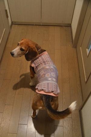 201511犬服35作目25