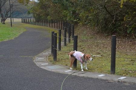 20151202松崎台公園09